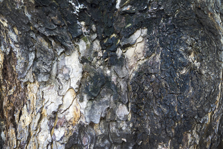 strong base: Bark texture background pattern