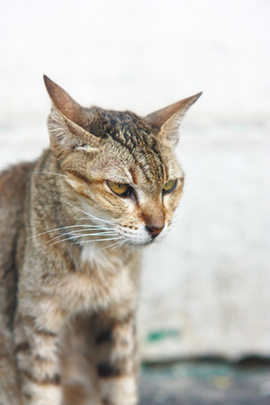 christmas pussy: cat