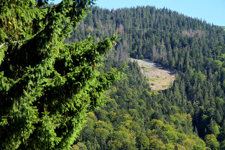 alpine zone: Landslide in the Carpathian mountains to Synevyrskiy pass near forest.