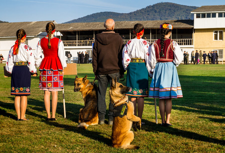 service dog: Mukachevo, Ukraine - September 27. 2016: Service dog at the time of the First National Police Championship in Ukraine with all-around dog handlers.