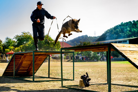 handlers: Mukachevo, Ukraine - September 27. 2016: A policeman with his dog overcomes obstacles band during the first championship of the National Police of Ukraine with all-around dog handlers.