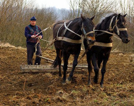 Goronglab, Ukraine - March 11, 2015: A farmer cultivates the land with the help of horses and harrows, hand, old-fashioned method. Editorial