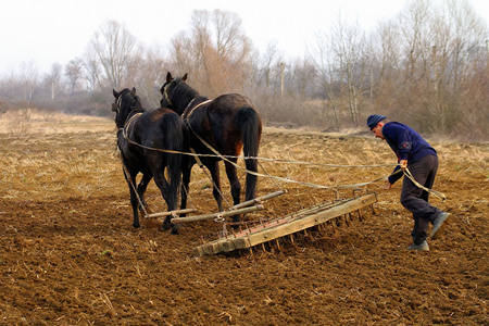 traction: Goronglab, Ukraine - March 11, 2015: A farmer cultivates the land with the help of horses and harrows, hand, old-fashioned method. Editorial