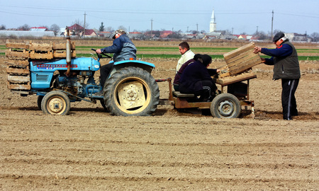 local 27: Great Dobron, Western Ukraine - March 27, 2012. The family of a local farmer is planting potatoes on his land in springtime.