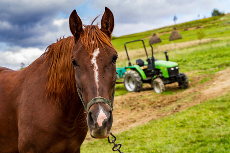 The horse grazes on a mountain meadow near a mini tractor on a cloudy day. Mountain agricultural landscape. Stock Photo