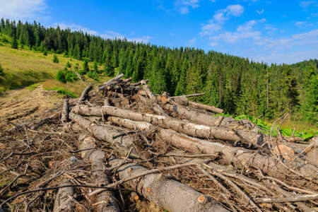 Pines cut down and abandoned along a forest road in the Carpathians, western Ukraine. Banque d'images