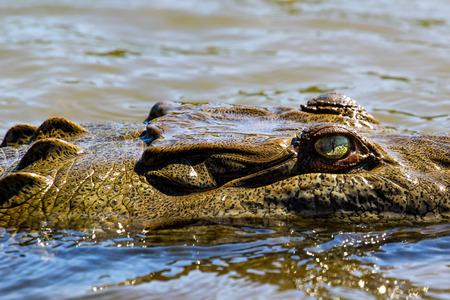 croc: Croc eye Stock Photo