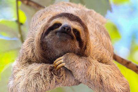 Glückliche Sloth