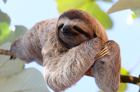 three animals: Happy Sloth