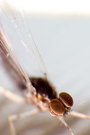 imago: Macro foto  insect eye . . . .