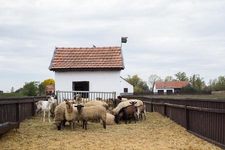 Racka Shape of Hungary