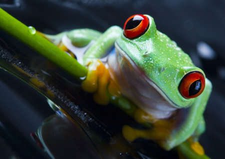 colours tints: Frog Stock Photo