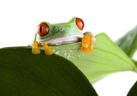 Frog Stock Photo - 720690
