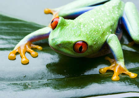 colours tints: Frog on the leaf