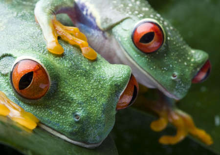 colours tints: Two frog