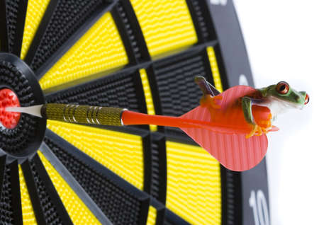 rotaugenlaubfrosch: Bullseye