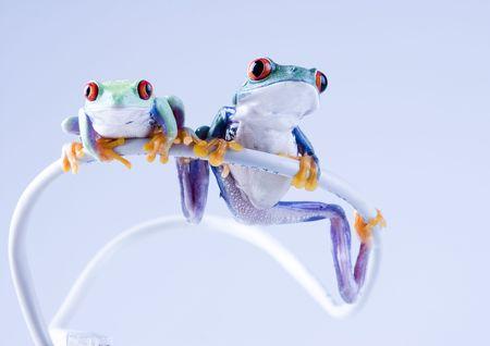 Net frog Stock Photo - 788152