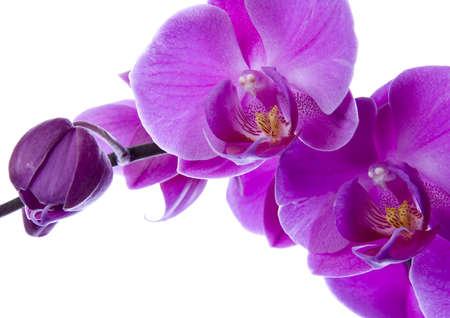 Orchidee Zdjęcie Seryjne