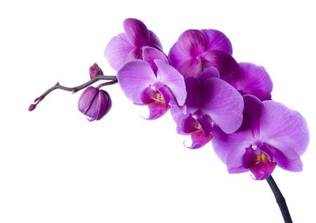 orchid flower: Orchids