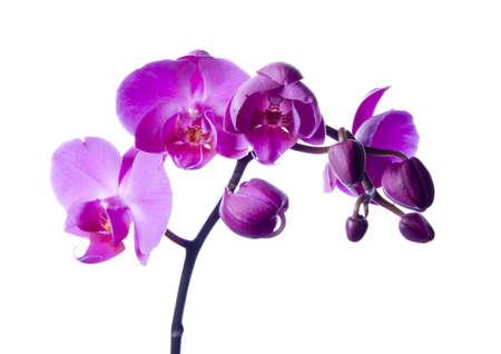 dinamismo: Orchidee  Archivio Fotografico