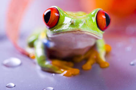 lean out: Red eyed tree frog