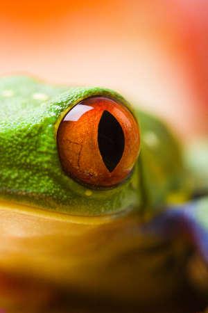 anura: Frog