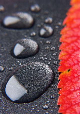 Closeup leaf Stock Photo - 951856