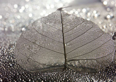 lifeless: Leaf