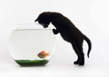 Black cat & Gold fish photo