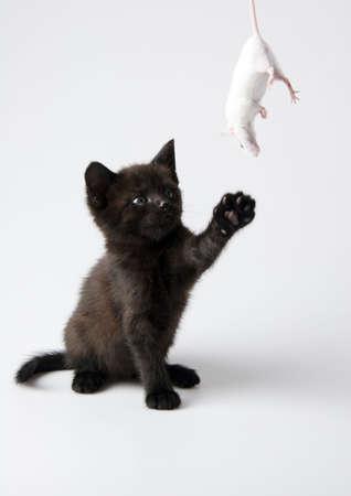Black cat & White mouse photo