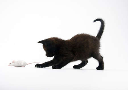 Black cat & White mouse photo