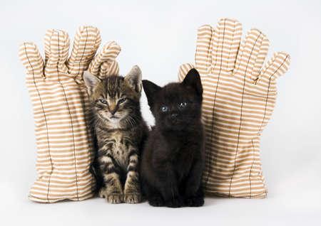 Cats Stock Photo - 952347