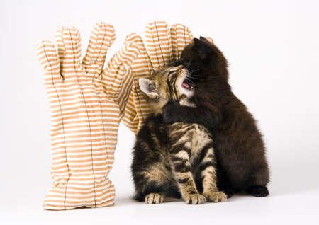 Cats Stock Photo - 952352
