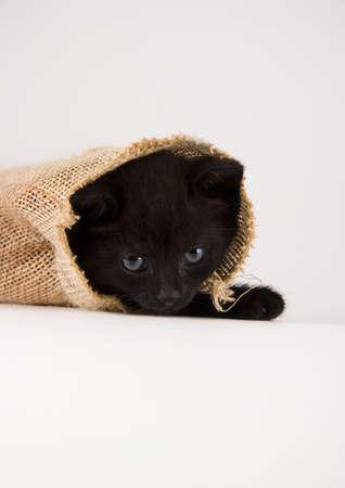 The cat Stock Photo - 952363