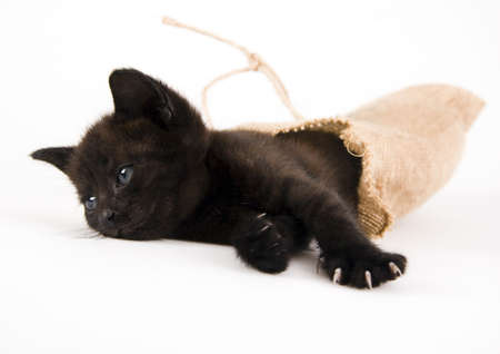The cat Stock Photo - 952364