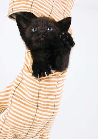 The cat Stock Photo - 952365