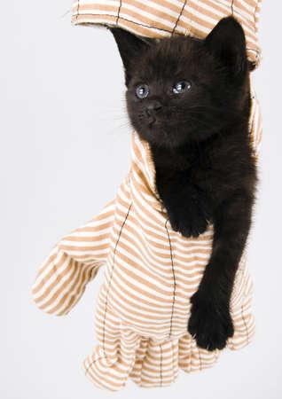 The cat Stock Photo - 952366
