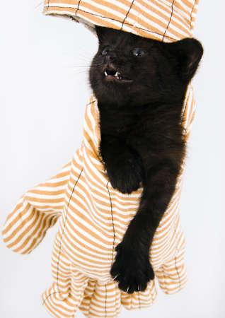 Happy cat Stock Photo - 952367