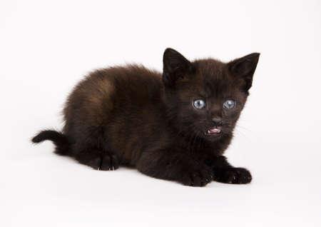 Cat Stock Photo - 952371