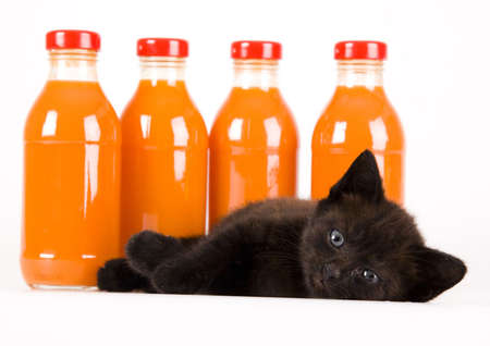Cat & Orange drink photo