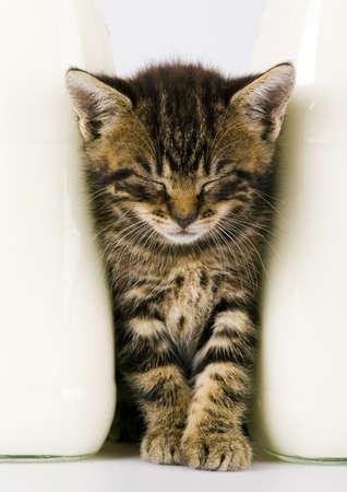 Cat & Milk Stock Photo