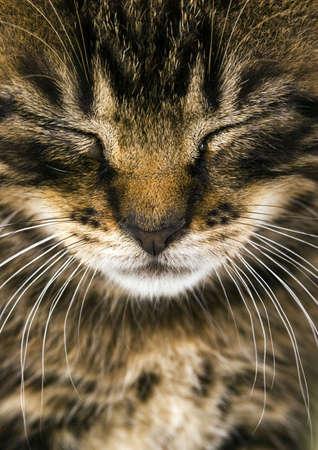 Cat Stock Photo - 952426