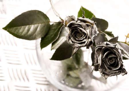 Beautiful roses Stock Photo - 2152434