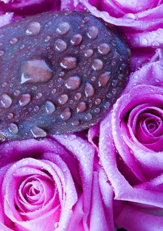 Spa roses Stock Photo - 2151550