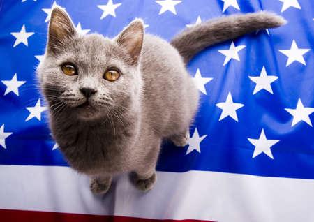 shorthair: U.S. Animal
