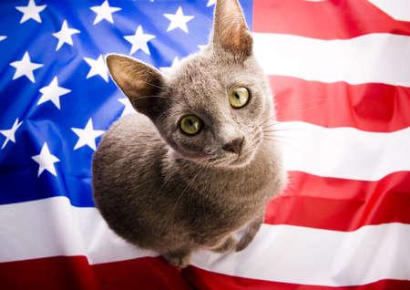russian blue: Russian Blue on U.S.A flag    Stock Photo
