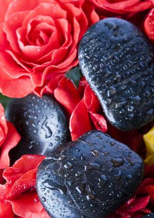 Roses Stock Photo - 2385532