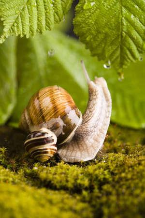 Snails Stock Photo - 3116339