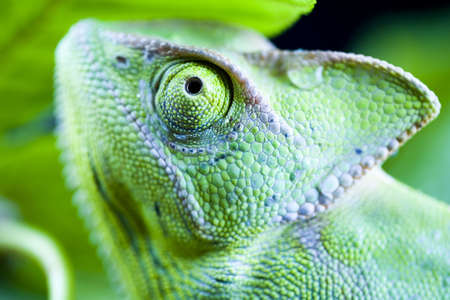 Chameleon Stock Photo - 3119406