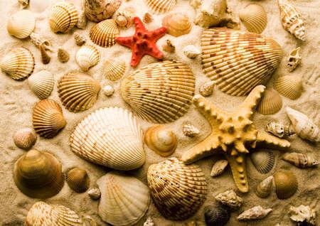 exoskeleton: Shells